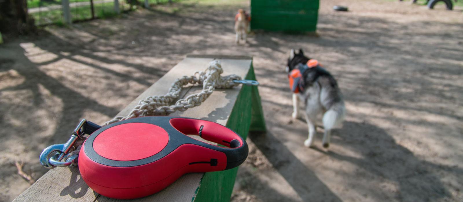 У Львові облаштують прогулянкові маршрути для собак